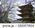 雪 瑠璃光寺 五重塔の写真 36697804