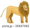 挿絵 動物 哺乳類のイラスト 36697985