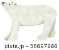 挿絵 動物 哺乳類のイラスト 36697986