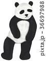 挿絵 動物 哺乳類のイラスト 36697988
