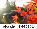秋 あき 秋のの写真 36698014