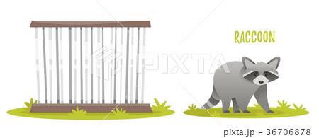 illustration of raccoon 36706878