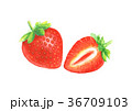 いちご イチゴ 苺のイラスト 36709103