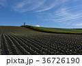 嬬恋のキャベツ畑 36726190