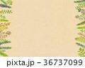 植物 フレーム 枠のイラスト 36737099