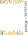 植物 フレーム 枠のイラスト 36737101