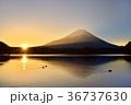 精進湖にカモと日の出と光芒当たる富士山 36737630