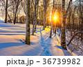 ウィンター ウインター 冬の写真 36739982