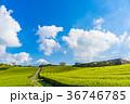 茶畑 富士山 静岡県の写真 36746785