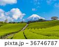 茶畑 富士山 静岡県の写真 36746787