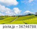 茶畑 富士山 静岡県の写真 36746788