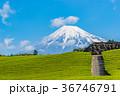 茶畑 富士山 静岡県の写真 36746791