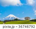 茶畑 富士山 静岡県の写真 36746792