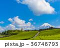 茶畑 富士山 静岡県の写真 36746793