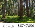 平泉寺白山神社 苔 林の写真 36747850