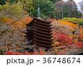 談山神社 十三重塔 紅葉の写真 36748674