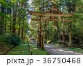平泉寺白山神社 白山神社 参道の写真 36750468