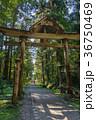 平泉寺白山神社 白山神社 参道の写真 36750469