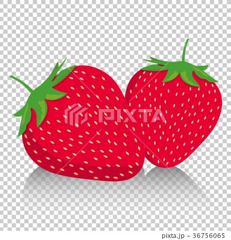 イチゴのイラスト|二粒の苺|フルーツ スイーツ 季節の果物|strawberry 36756065