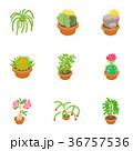 フラワー 花 アイコンのイラスト 36757536