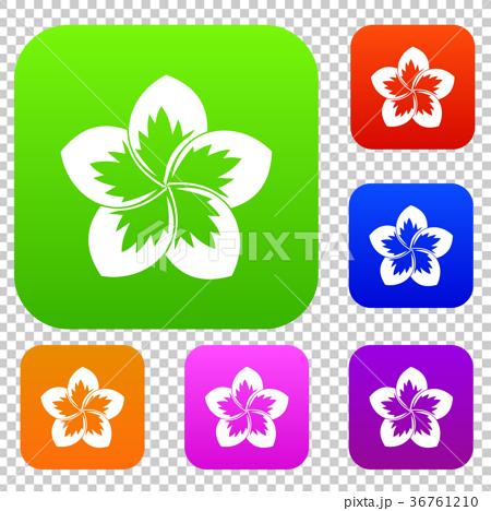 Frangipani flower set collection 36761210