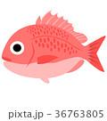鯛 36763805