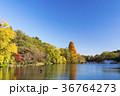 秋の井の頭公園 36764273