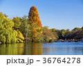 秋の井の頭公園 36764278