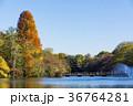秋の井の頭公園 36764281