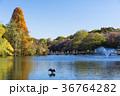 秋の井の頭公園 36764282
