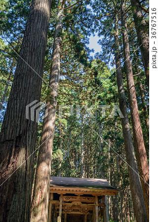 平泉寺白山神社 境内風景 36767516