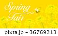 ミツバチと菜の花 スプリングフェア 36769213
