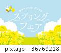 菜の花畑 背景イラスト 36769218