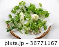 春の七草 36771167