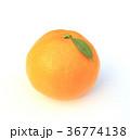 温州みかん みかん 蜜柑の写真 36774138
