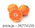温州みかん 蜜柑 果物の写真 36774150