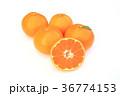 温州みかん 蜜柑 果物の写真 36774153
