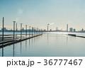 江川海岸 海 青空の写真 36777467