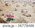 夏山の花 36778486