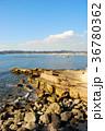 逗子マリーナ 海 自然の写真 36780362