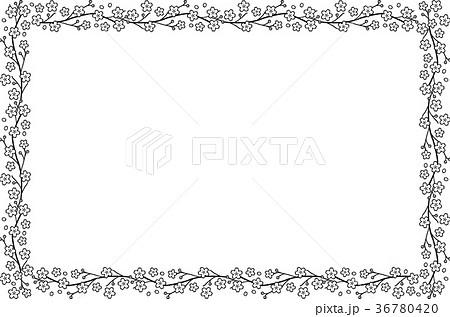 桜のフレーム 白黒のイラスト素材 36780420 Pixta