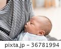 寝る 眠る 赤ちゃんの写真 36781994