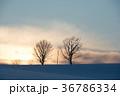冬 夕方 木立の写真 36786334