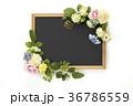 黒板(バック飛ばし、影イキ) 36786559
