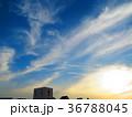 空 筋雲 青空の写真 36788045