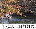 秋の井の頭公園 36789363