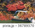 秋の井の頭公園 36789370