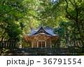 平泉寺白山神社 木漏れ日 林の写真 36791554