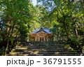 平泉寺白山神社 木漏れ日 林の写真 36791555