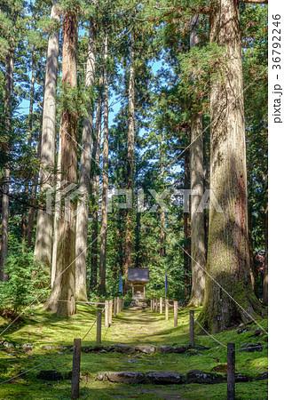 平泉寺白山神社 境内風景 36792246